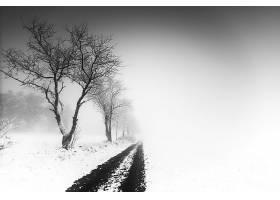 雾,自然,冬天的,泥土,路,白色,雪,壁纸,图片