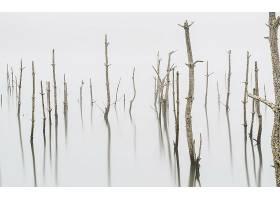 雾,自然,反射,树,壁纸,图片