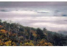 雾,自然,地平线,壁纸,图片