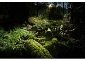 苔藓,木材,原木,植物,日出,森林,绿色的,蕨,壁纸,图片