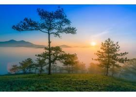雾,自然,地平线,太阳,日出,树,壁纸,图片