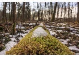 苔藓,森林,雪,自然,特写镜头,壁纸,图片