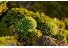 苔藓,自然,巨,壁纸,图片