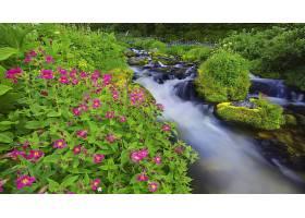 溪流,花,岩石,弹簧,紫色,花,苔藓,草,壁纸,图片