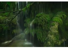 苔藓,自然,温室,壁纸,图片