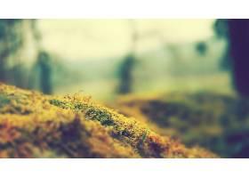 苔藓,草,巨,壁纸,图片