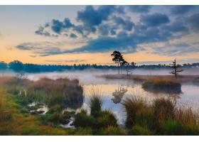 雾,自然,天空,黎明,草,壁纸,图片