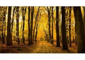 森林,自然,秋天,树,泥土,路,壁纸,图片