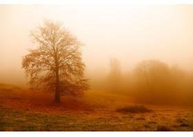 雾,自然,寂寞的,树,秋天,壁纸,图片
