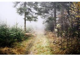 雾,自然,小路,树,壁纸,图片