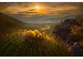 地球,风景,仙人掌,自然,日出,壁纸,图片