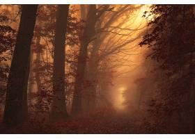雾,自然,小路,森林,树,壁纸,图片