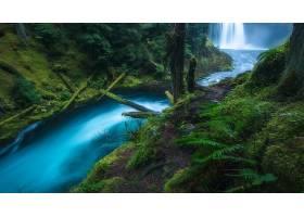 瀑布,瀑布,Koosah,瀑布,俄勒冈州,森林,绿色的,溪流,蕨,壁纸,图片