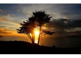 日落,湖,树,阴影,地平线,自然,壁纸,图片