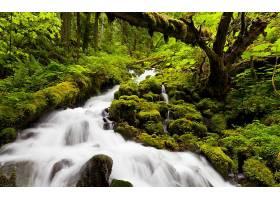 瀑布,瀑布,森林,岩石,温室,苔藓,溪流,壁纸,图片