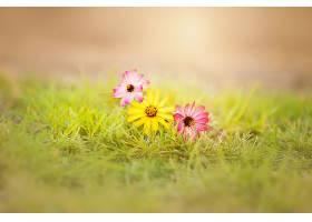 地球,花,花,草,粉红色,花,黄色,花,壁纸,图片