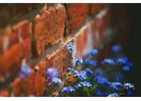 地球,花,花,砖,壁纸,图片