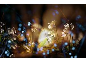地球,花,花,Bokeh,深度,关于,领域,灯光,白色,花,壁纸,图片