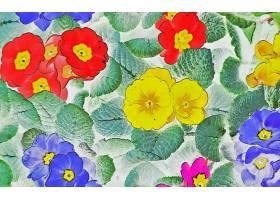 花,自然,壁纸,(1)