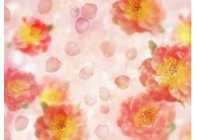花,壁纸,(315)