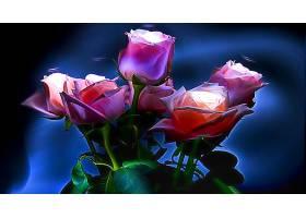 花,玫瑰,壁纸,(1)