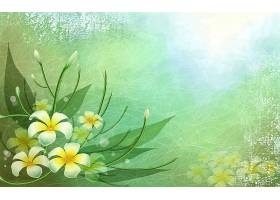 花,白色,花,线,壁纸,