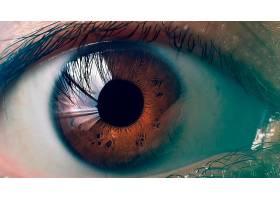 眼睛,棕色,眼睛,壁纸,