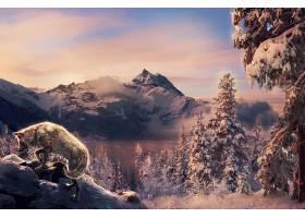幻想,狼,幻想,动物,自然,风景,冬天的,山,壁纸,