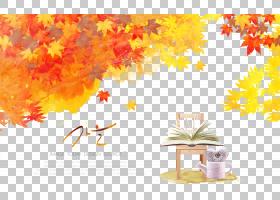 枫叶秋季落叶椅子书籍背景