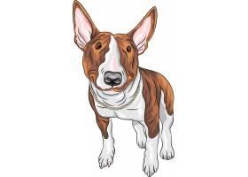宠物狗设计