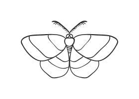 飞蛾蝴蝶主题装饰图案设计