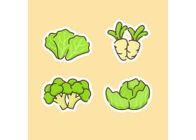 卷心菜萝卜西兰菜主题插画设计