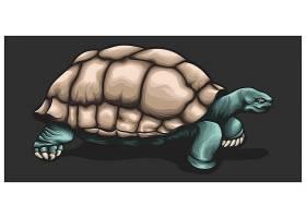 矢量海龟设计