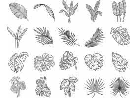 多款不同形态的植物叶子素材