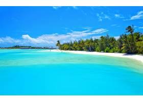 节日,海洋,热带的,绿松石,蓝色,手掌,树,岛,壁纸,