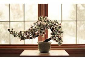 东方的,盆栽,树,花,亚洲的,壁纸,