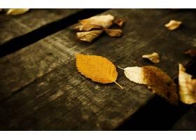 秋天,壁纸,(70)