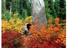 秋天,自然,树,叶子,风景,壁纸,