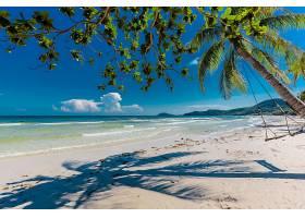 海滩,手掌,树,沙,地平线,海洋,海岸线,摇摆,壁纸,