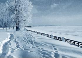 冬天的,脚印,树,风景,雪,降雪,壁纸,