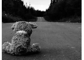 黑色,白色,路,泰迪,熊,悲哀的,风景,壁纸,