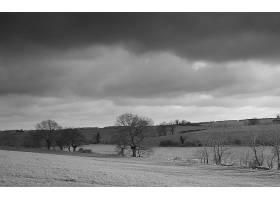 黑色,白色,风景,壁纸,(1)