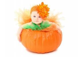 婴儿,漂亮的,橙色的,花,南瓜,壁纸,