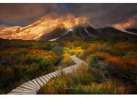 山,塞夫顿的,花园,Aoraki,国家的,公园,新建,西兰岛,风景,壁纸,