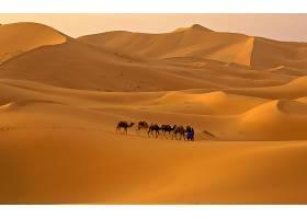 撒哈拉沙漠,壁纸,