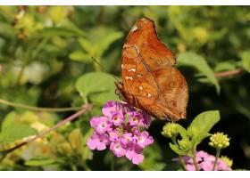 蝴蝶,花,壁纸,(1)