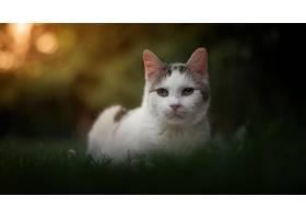 猫,猫,宠物,凝视,深度,关于,领域,壁纸,(1)