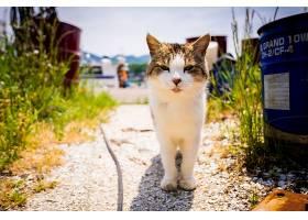 猫,猫,宠物,凝视,深度,关于,领域,壁纸,