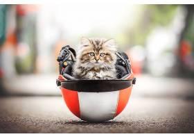 猫,猫,宠物,婴儿,动物,小猫,深度,关于,领域,头盔,壁纸,
