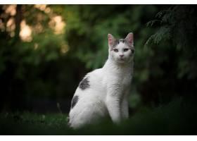 猫,猫,宠物,深度,关于,领域,壁纸,(1)